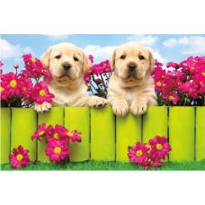 Postcard - Two puppies 10.5x15.7cm