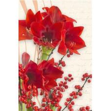 Postcard - Amarillis 8x12cm