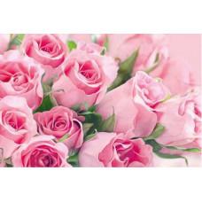 Postcard - Pink roses 8x12cm