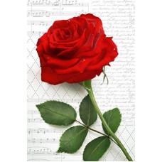 Postcard - Red rose 8x12cm
